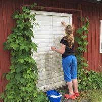 Mer trädgårdsarbete – vinbärsbuskarna och grusgång