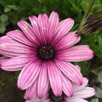 Bland blommor och blad – en sommardag i Vintervikens trädgårdar