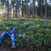 Skogen – promenader i ledigheten